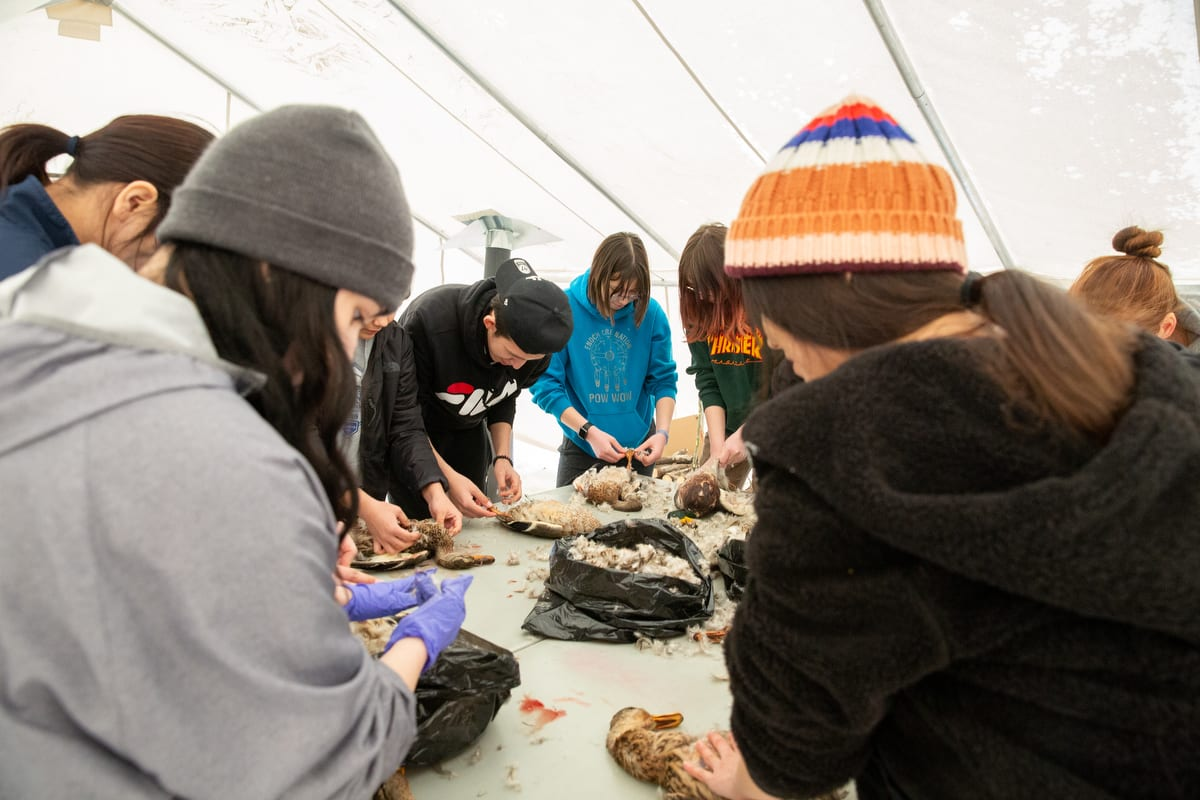 Students pluck feathers from ducks at a Traditional Foods Camp in Enoch, Alberta.